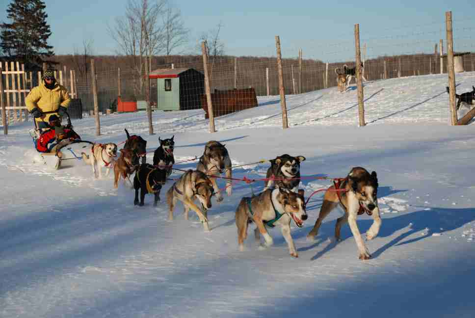 Sled Dog Craft http://www.edenmtnlodge.com/